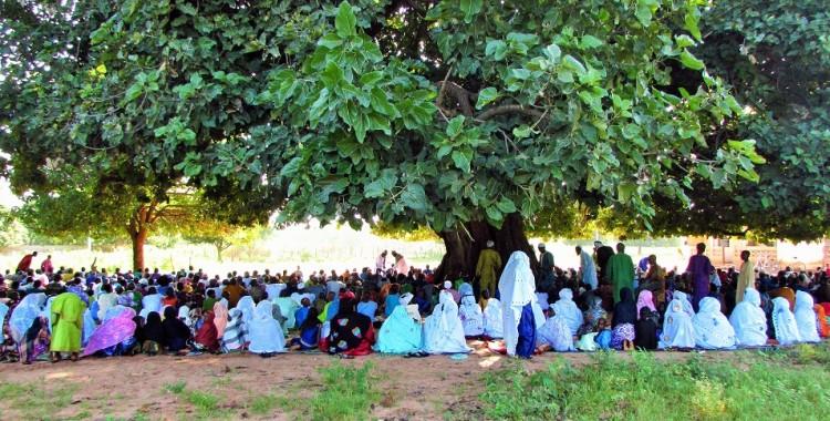 Tobaski: Under the baobab tree