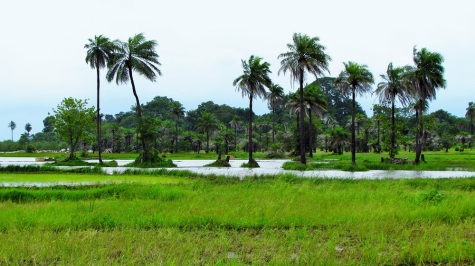 090115_Sibanor_Rice Fields (2)