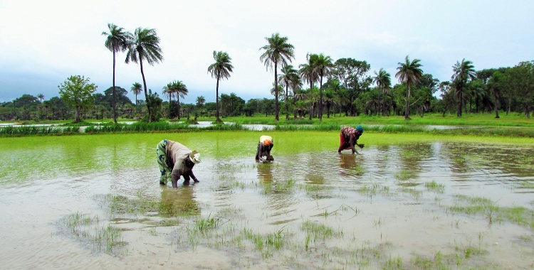 A Day at the Rice Field