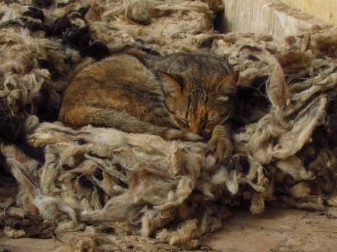A cat nap!