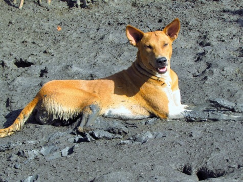 Leo lounging in the mud (of course).