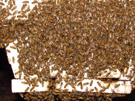 050915_Toroba_Farm_Beekeeping (46)