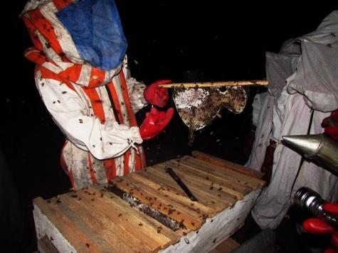053015_Lamin_BEEcause Training_Beekeeping (12)