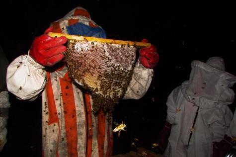053015_Lamin_BEEcause Training_Beekeeping (13)