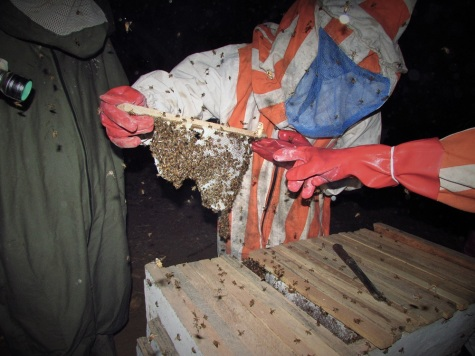 053015_Lamin_BEEcause Training_Beekeeping (9)