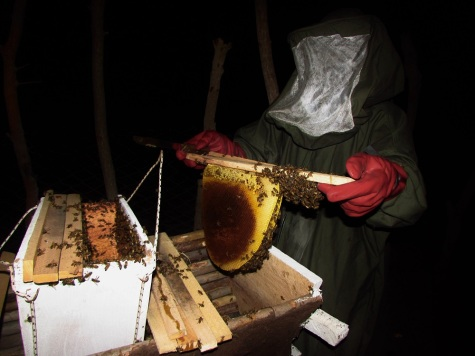Transferring our first swarm