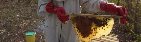 Beekeeping: A Lesson in Resilience
