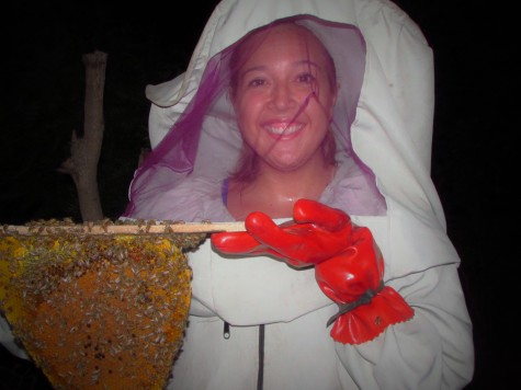 Me transferring bees to a hive during my last beekeeping session with Ebrima.