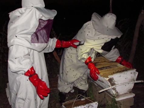 My mom and Ebrima transferring bees that would later leave the hive.